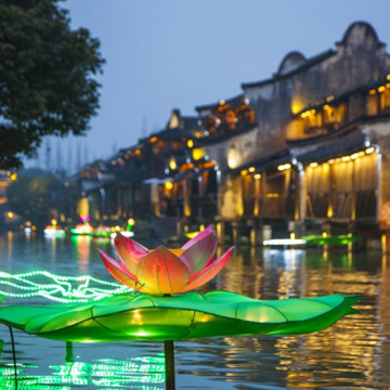Lantern Light Lotus.