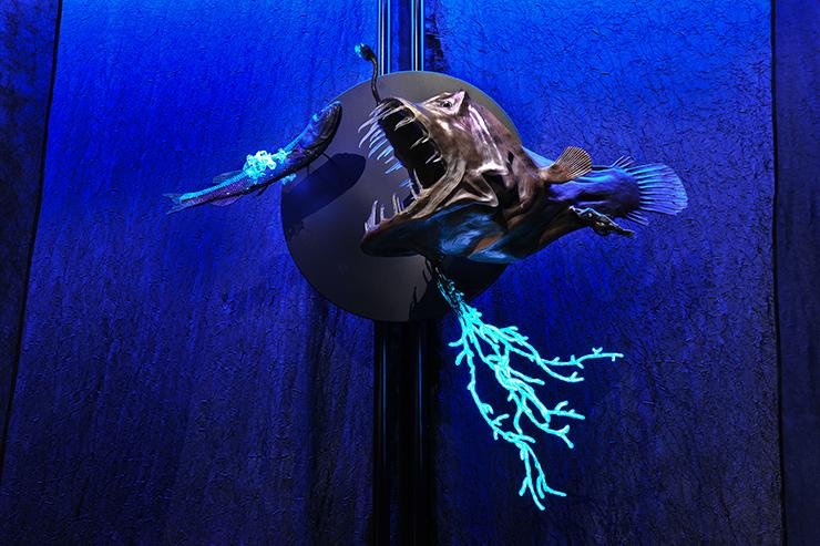 Anglerfish.