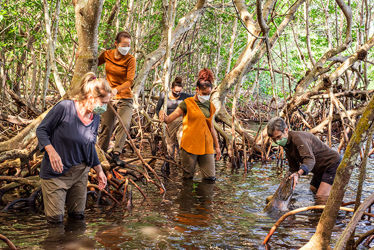 Because dance studios were closed during COVID-19, Dale Andree and dancers went to the mangroves.